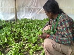 Una donna al lavoro nella serra