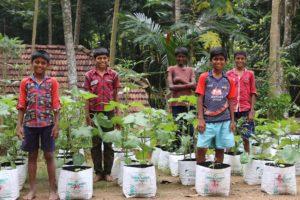 Kitchen Garden, un progetto di coltura biologica